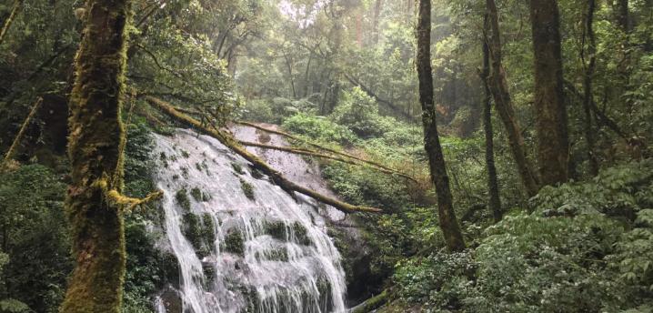 Doi Inthanon Kaew Mae Pan Trail