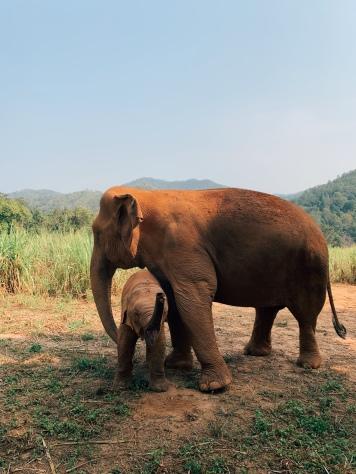 Karen Elephant Sanctuary CNX