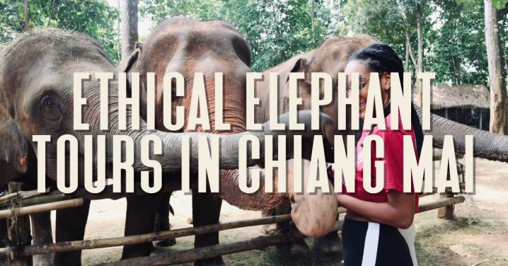 Ethical Elephant Tours in Chiang Mai: Costs, Inclusions and What toExpect